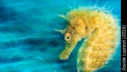 La vida subacuática en imágenes